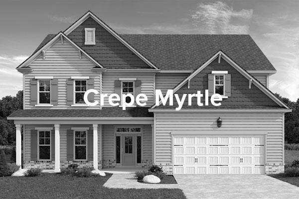 CrepeMyrtleHover.jpg