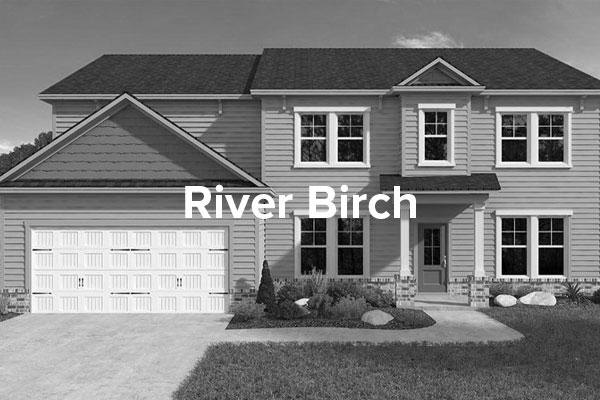 River-BirchHover.jpg