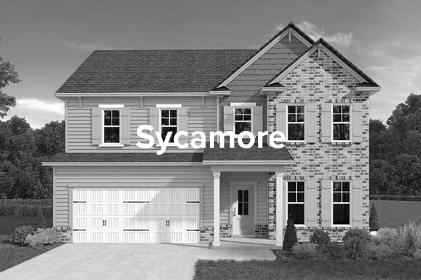 SycamoreHover.jpg