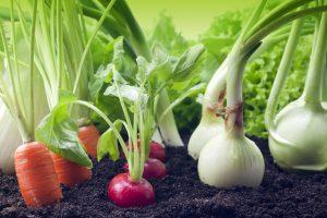 vegtable-garden_iStock-178373458-300x200.jpg